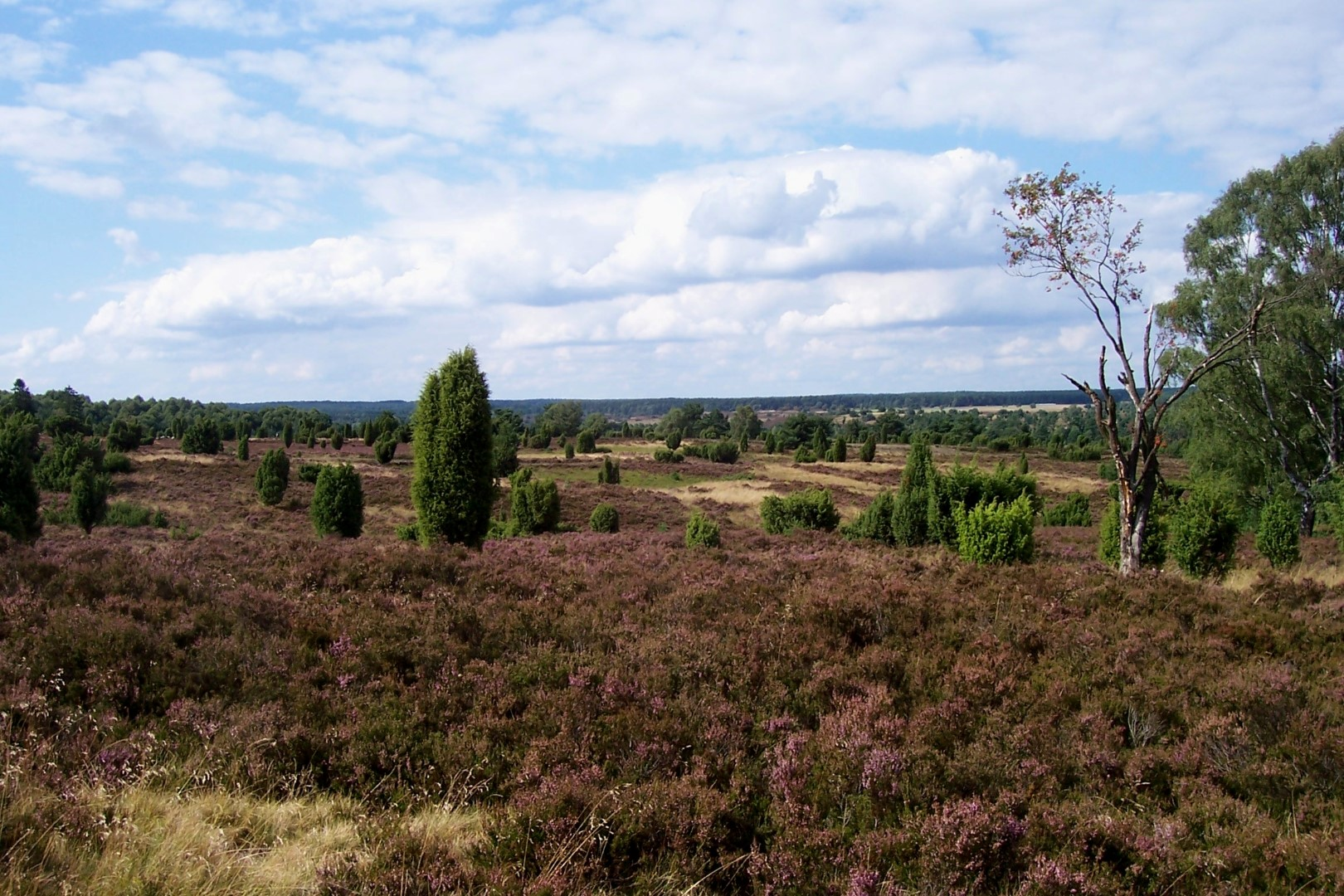 Undeloher Heide